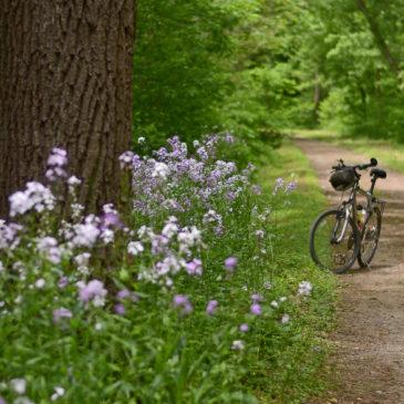 Caminho da fé de bike?