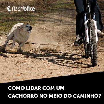 E aí, você pedalando sua bike, e pinta um cachorro no meio do caminho, o que fazer?